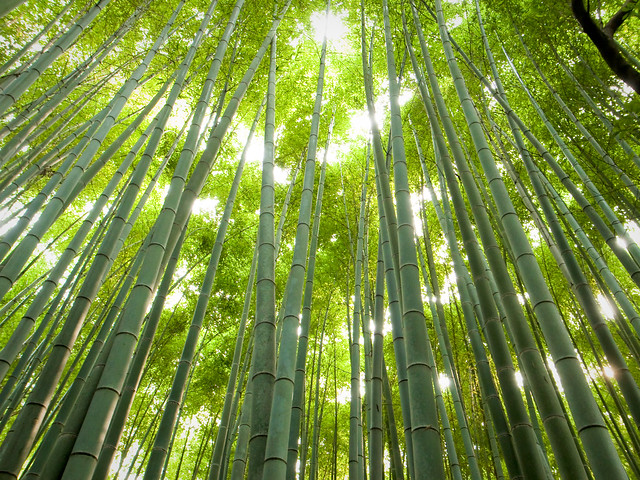 the path of bamboo, revisited #12 (near Tenryuu-ji temple, Kyoto)