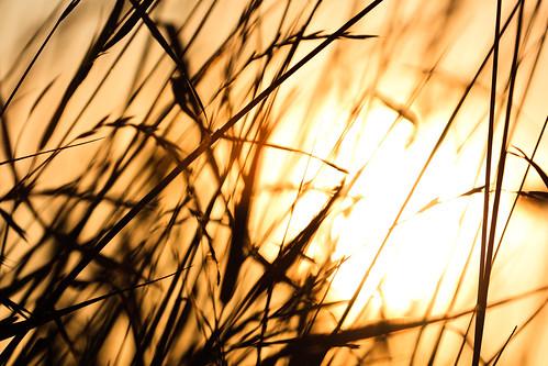 sunset sun grass flora sundown lithuania