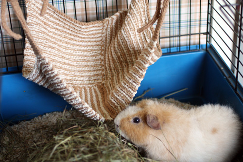 Knitting Pattern For A Guinea Pig : Knitted Hammock for Guinea Pig Flickr - Photo Sharing!