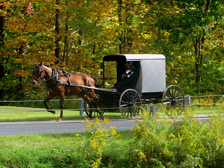 Sunday Afternoon Buggy Ride | by audreyjm529