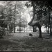 Forest - Indian Trail Tree, Dam 2 by UIC Digital Collections