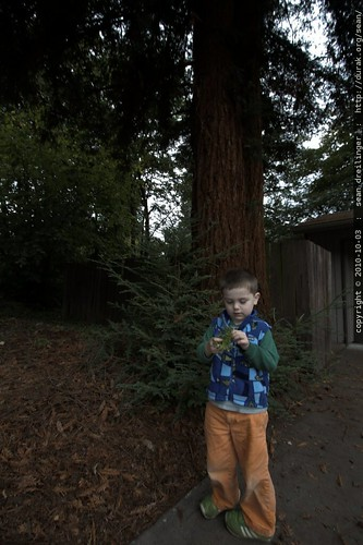 """""""that tree is me"""""""