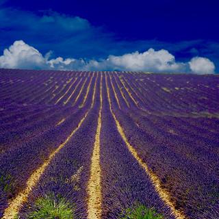 Raising Horizon (Lavender High)