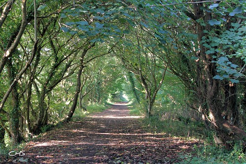 Autumn on the old Newham Railway Line (Truro) by Stocker Images