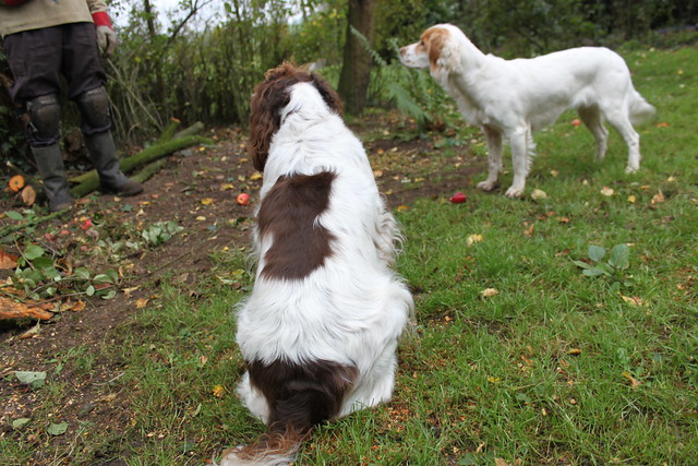 Meg & Flossie hoping that John will throw an apple