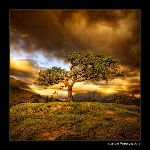 sunset sky tree landscape atardecer golden ecuador iván hdr otavalo sacredtree imbabura nikond200 colorphotoaward ellechero artistictouch ivánmaigua