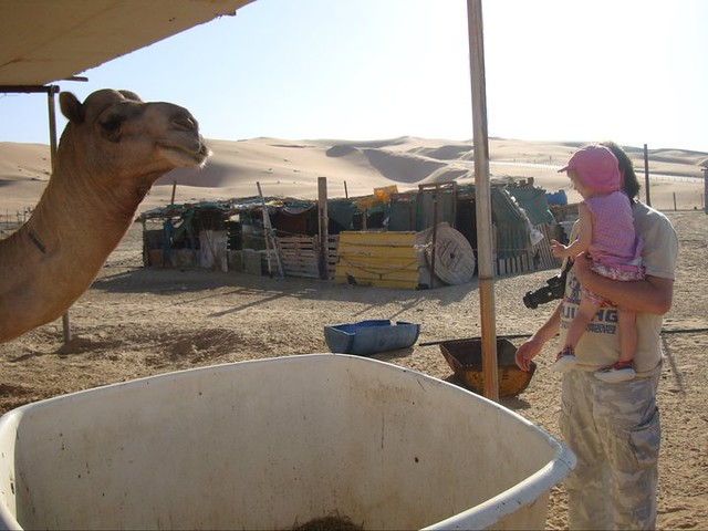 "Desert Antics - saying hello to a ""real camel"""