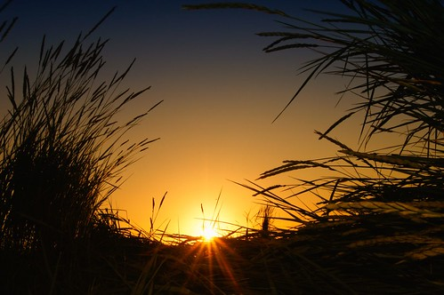 plants grass silhouette sunrise reeds sunburst