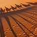 Long shadows in the desert