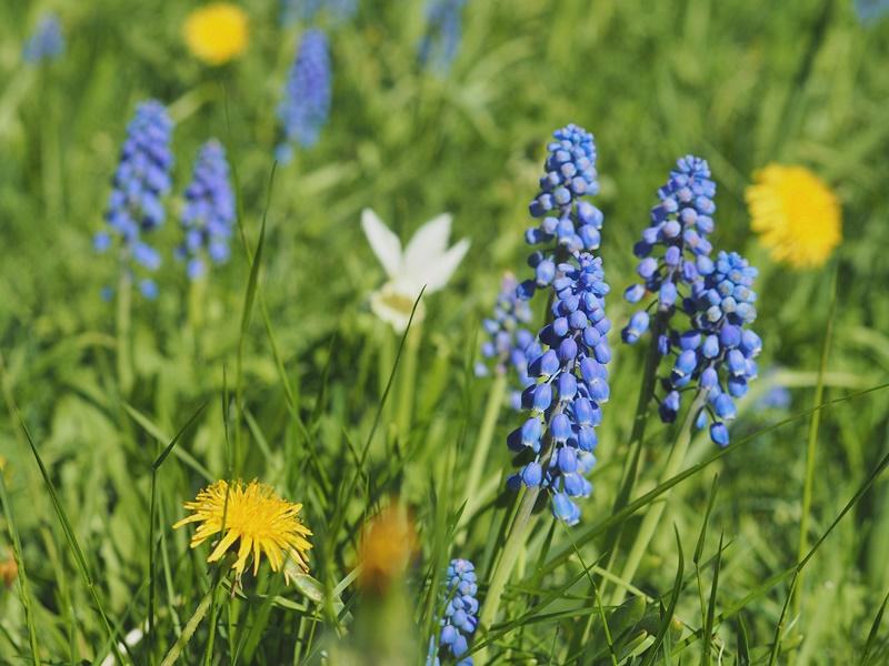 kukkia-kuopio-finlandnature