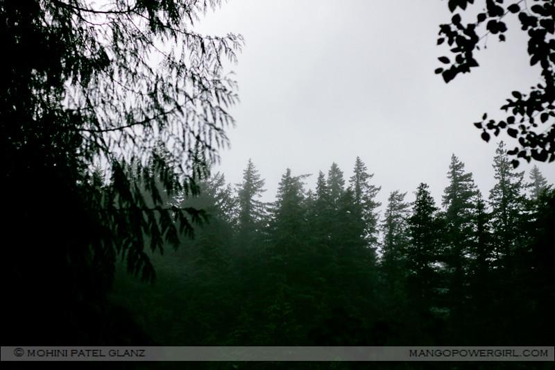 pnw fog