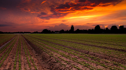 sunset growth crops agriculture berkshire kevday taplow