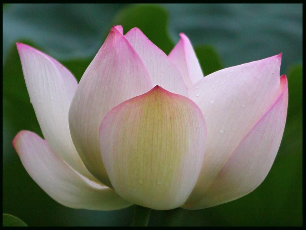 Lotus eaters by maria noller izmirmasajfo