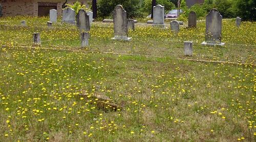cemetery graveyard georgia dead headstones wildflowers dandelions conyers almandcemetery