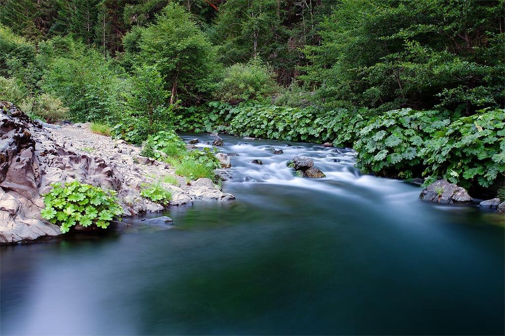 The Fishing Hole: Mad River, California