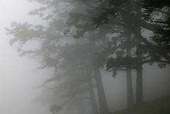 niebla de verano
