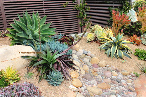 Succulent garden by the sea