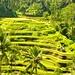 Ubud Wanderings (Bali)