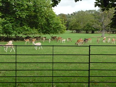 Magdalen College Deer Park