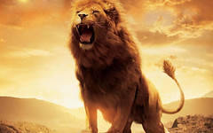 animal, mane, big cats, lion, mammal, roar, fauna,