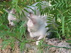 White kittens at Nostos Studios