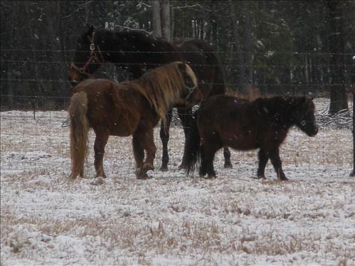 horsessnow
