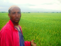 Jundi Hajji is concerned how his family will survive if the yellow wheat rust claims his entire harvest. / Credit:Omer Redi/IPS