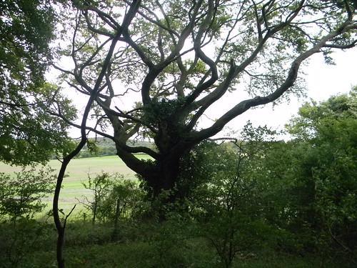 Snaky tree
