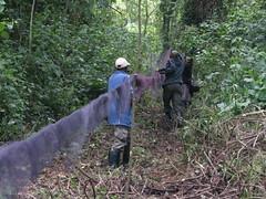 Benson and his team netting in Uganda