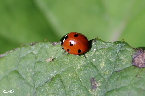 A busy Ladybird and friend by Stocker Images