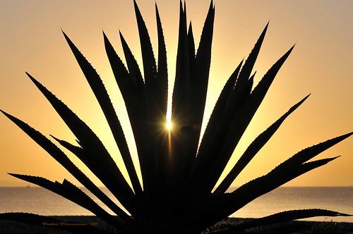 morning aloe waterfront sunrays 1111 orangeyellow nikond300 larnakacyprus dedicationfromcyprus cyprusseascape varnavasthearchitect larnakabay sundaywishes
