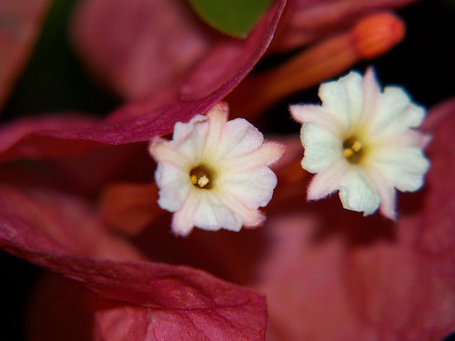 flowers flower nature beauty kodak bloom kodakz712is z712is kodak712is