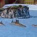 Naval Wargame