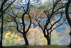 Autumn 2010.