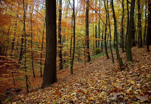 wood autumn trees yellow forest leaf herbst gelb wald baum fa sárga ősz erdő levél mywinners flickraward
