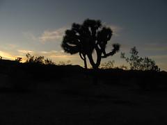 Joshua Tree National Park, California (47)