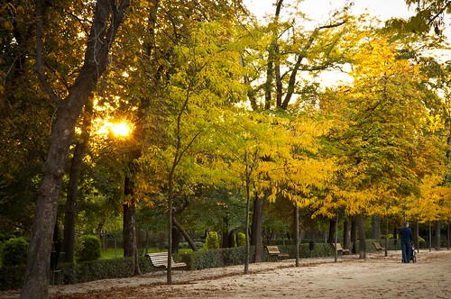 Retiro Park, Madrid, Spain. Backlit image of autumn trees and a man with a baby on a stroller