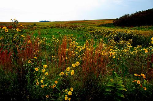 minnesota day clear wildflowers luverne bluemoundsstatepark luverneminnesota