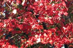 Autumn Colors Lake Crabtree NC 0440