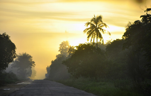 road tree silhouette sunrise suriname