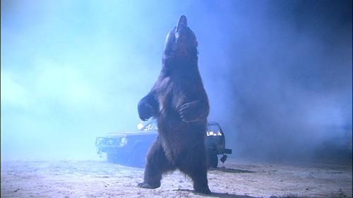 bear stand rage