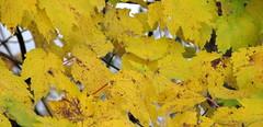 Autumn colors Walnut Creek Lake Raleigh NC 0493