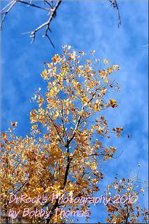 Palo Duro Canyon - 11-14-2010 (48)
