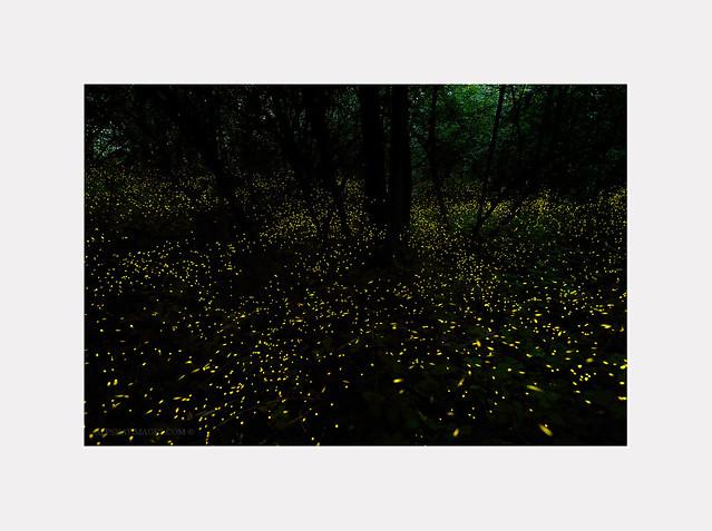 Magie nel bosco al calare della notte