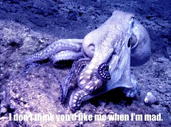 animal(1.0), octopus(1.0), organism(1.0), marine biology(1.0), invertebrate(1.0), marine invertebrates(1.0),