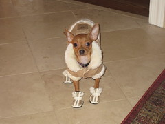Bruiser's New Shoes