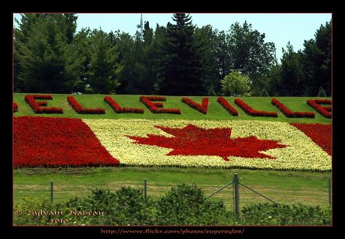 flowers toronto ontario fleurs highway montréal montreal flag belleville rush 40 autoroute 401 drapeau