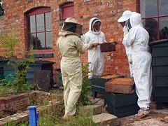 beekeeper,