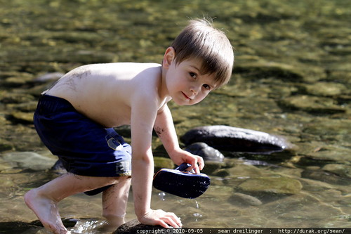 sequoia playing in the river