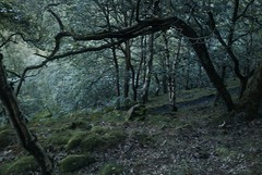 Callis and Horsehold Woods.